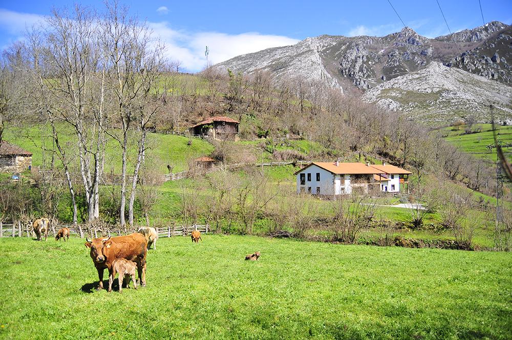 inmersion-linguistica-asturias