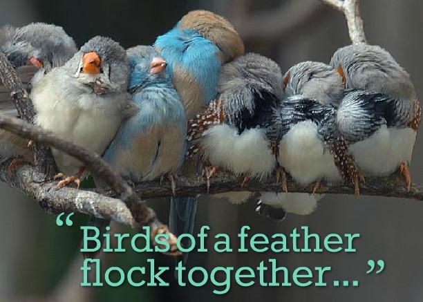 Pájaros juntos en una rama
